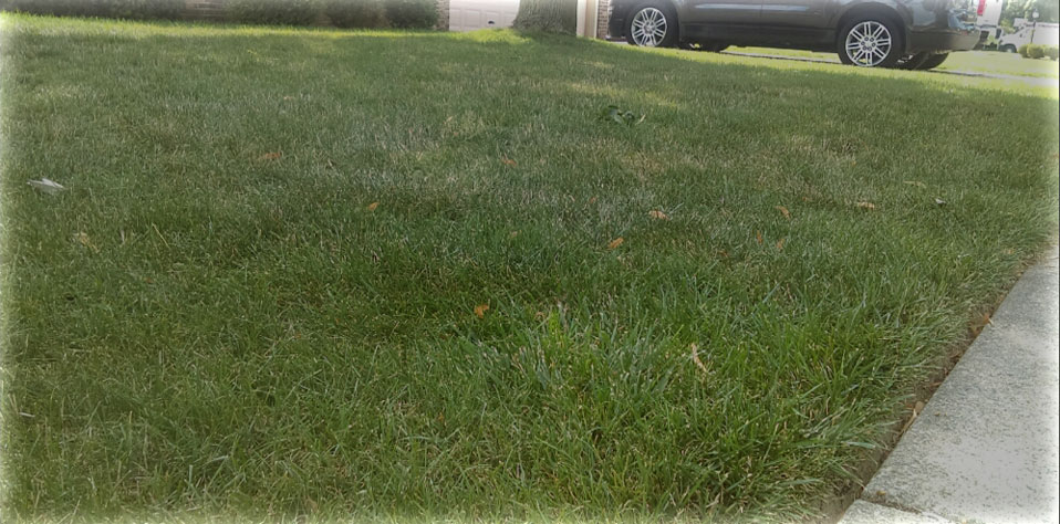 Affordable Lawn Care in Warren Michigan - MichiganLawnandSnow.net